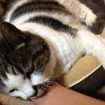 実家の愛猫が死んだ