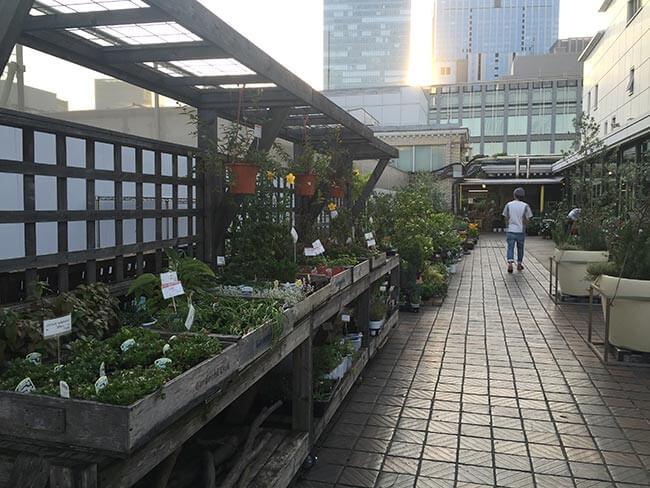 日本橋高島屋 園芸店 ガーデニストクラブ 屋上