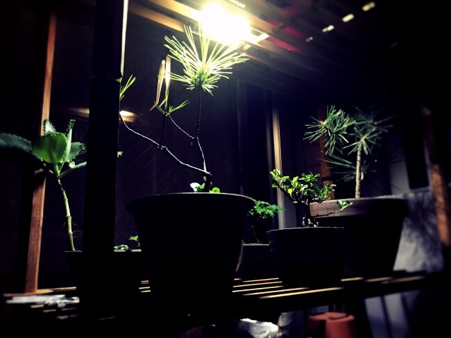 Mpow 8 LED ソーラーライト 夜間証明点灯
