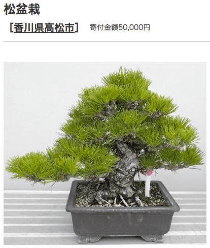 ふるさと納税 高知県高松市 盆栽